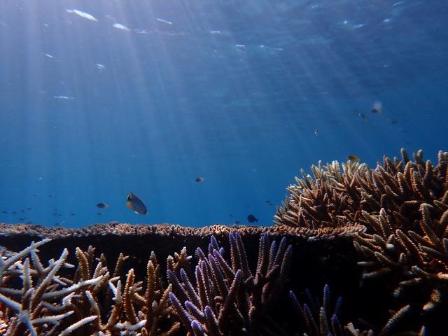 幻の島の海中風景
