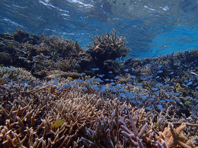 カラフルサンゴいっぱいのバラス島