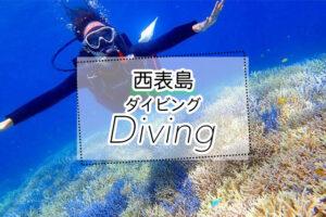 西表島のダイビングツアー