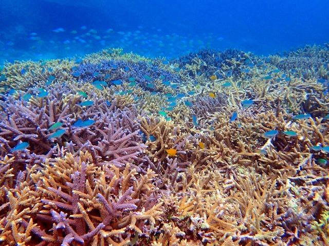 カラフルサンゴいっぱいのバラスの海