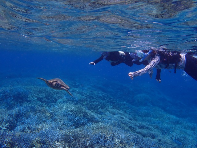 西表島近くのバラス島にはカラフルなサンゴがいっぱい