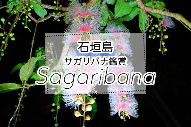 石垣島のサガリバナ鑑賞ツアー