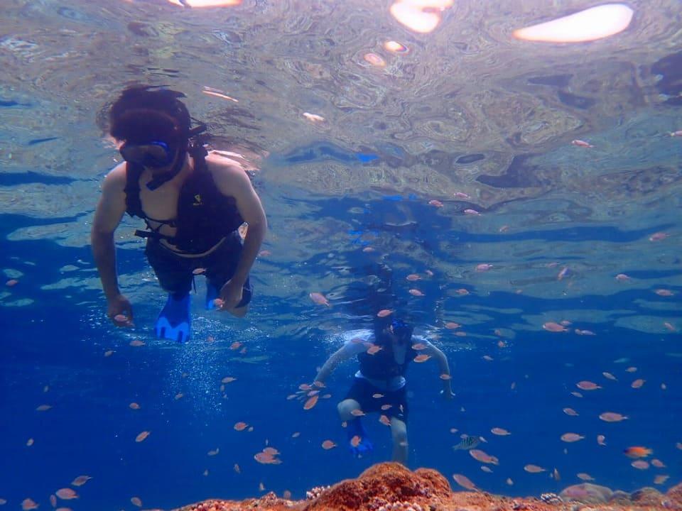 青の洞窟周辺の熱帯魚が沢山いる海