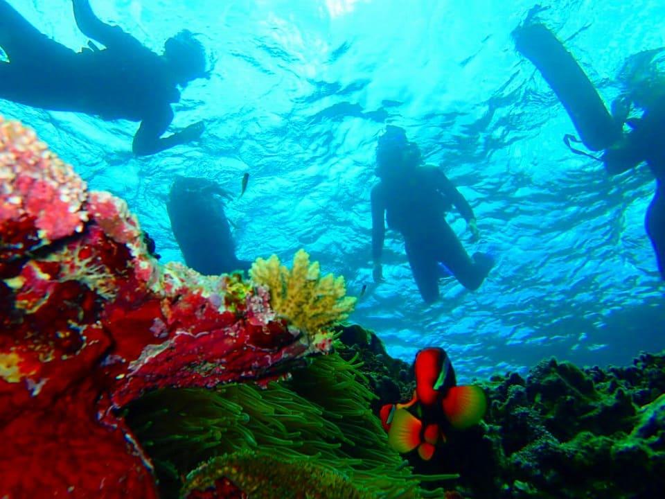 カクレクマノミがいる石垣島の青の洞窟周辺の海