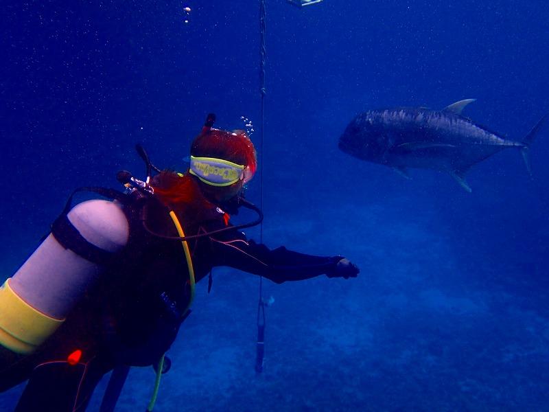 ダイビング中にお魚に遭遇