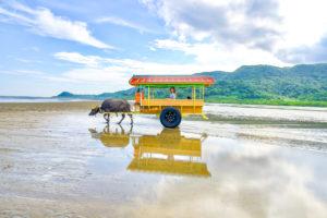西表島の水牛車観光ツアー