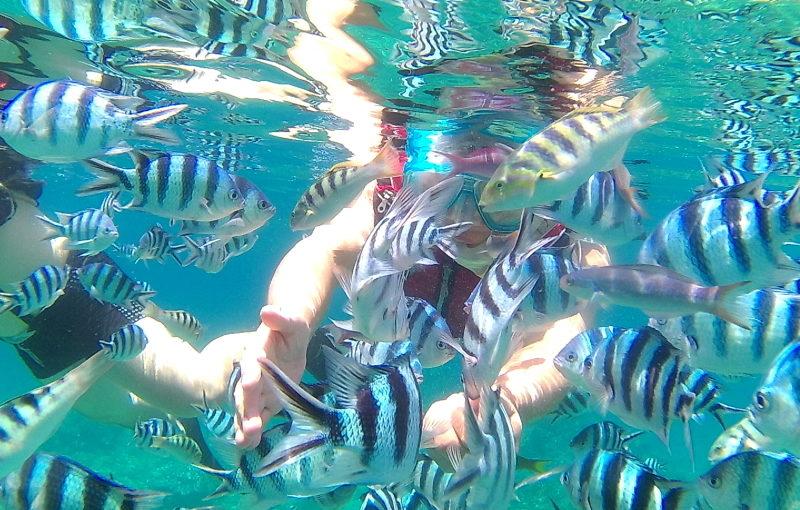 沖縄の国頭村の海では魚の群れと泳ぐこともできる