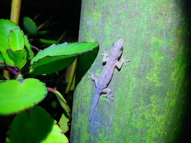 西表島の亜熱帯動物を観察