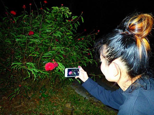 西表島の亜熱帯植物を撮影中の女性
