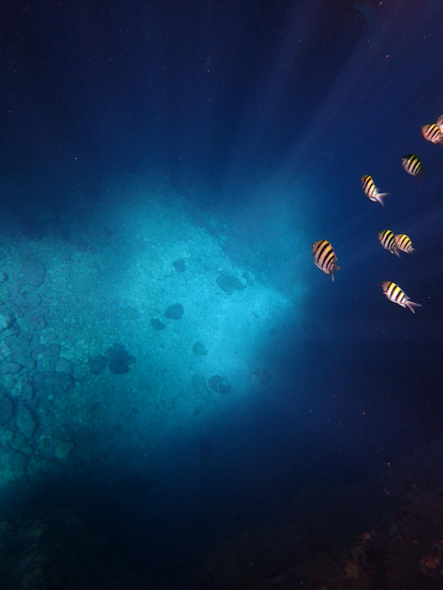 沖縄の青の洞窟にはお魚がたくさん泳いでいる
