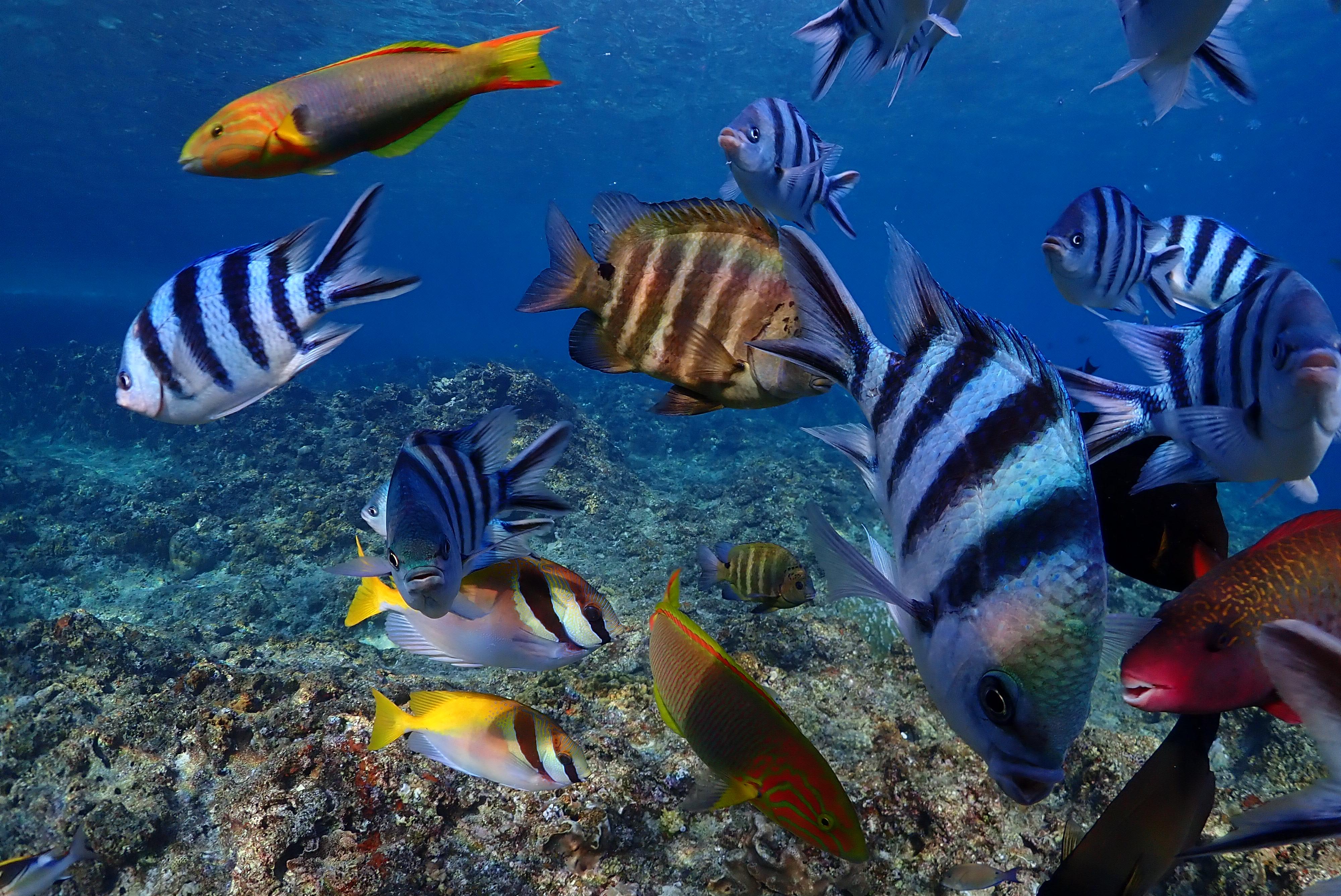 沖縄の真栄田岬の海でたくさんの魚に出会う