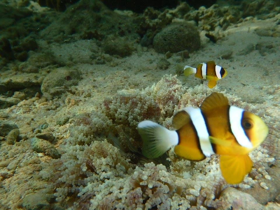 沖縄の青の洞窟には熱帯魚が泳いでいる