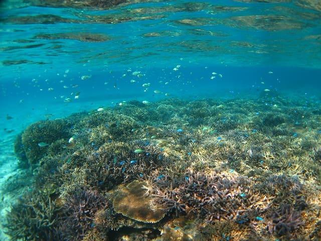 石垣島の幻の島周辺の海