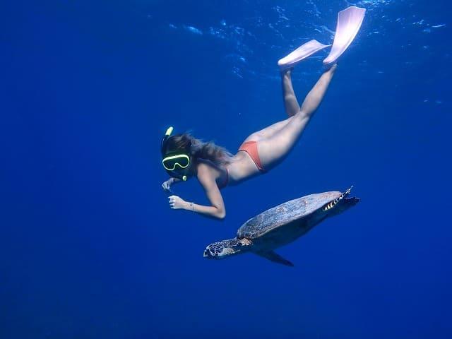 ウミガメとシュノーケリングをする女性