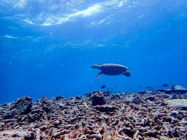 バラス島周辺でウミガメシュノーケリング