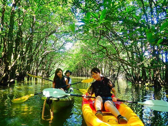 西表島のアーチ状のマングローブ川をカヌー体験