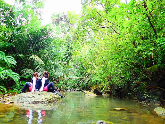 西表島の原生林をトレッキングする女子