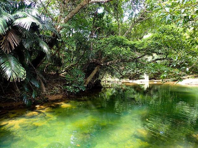川エビをとることができるモダマ池