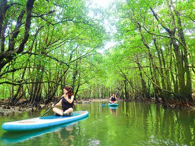 マングローブ林でカヌーをする女性
