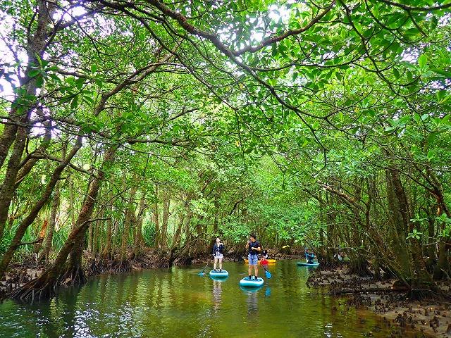 西表島マングローブSUPクルージングを体験する女性
