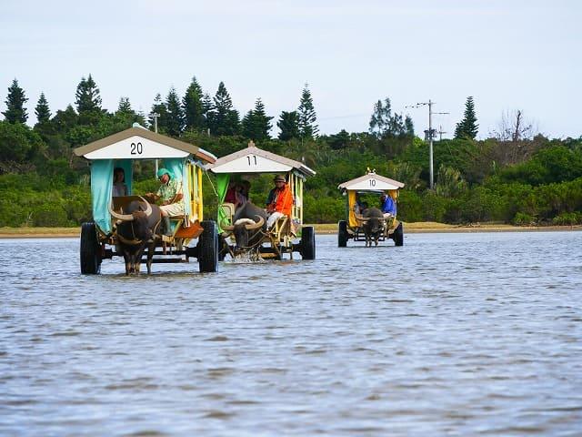 由布島の人気水牛車観光ツアー