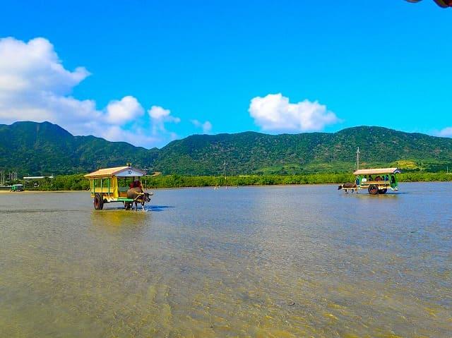西表島から由布島へ進む水牛車