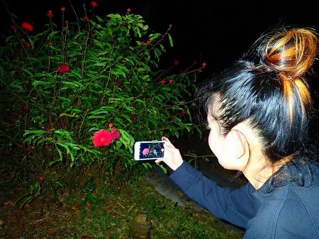 亜熱帯植物を撮影する女性