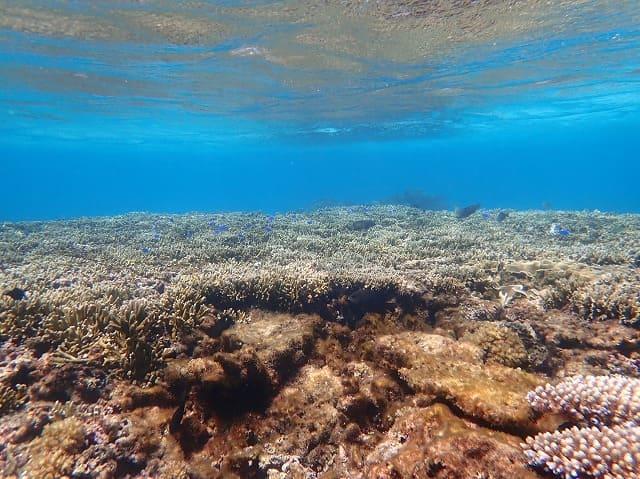 宮古島の手つかずのサンゴの海