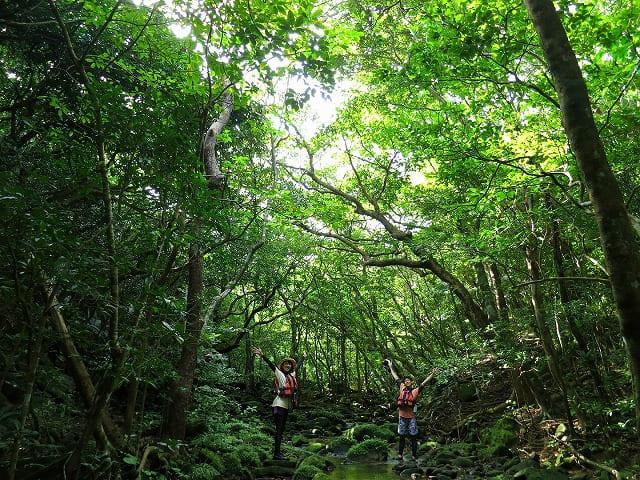 西表島の手つかずの大自然をトレッキング