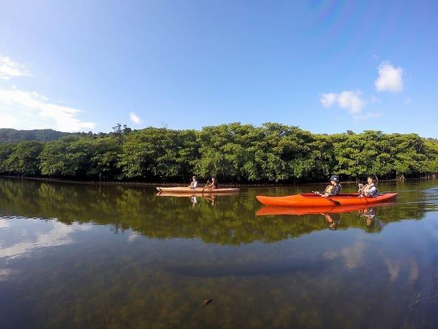 透き通ったマングローブ川をクルーズ