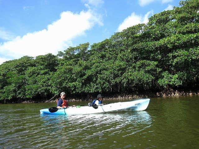 日本最大級のマングローブをカヌーでクルージング