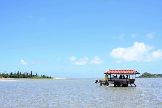 西表島から由布島へ水牛車で海を渡る