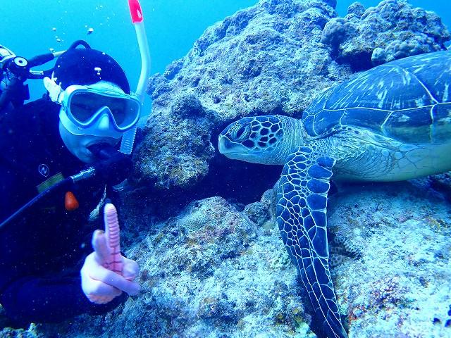 石垣島で見られるアオウミガメ