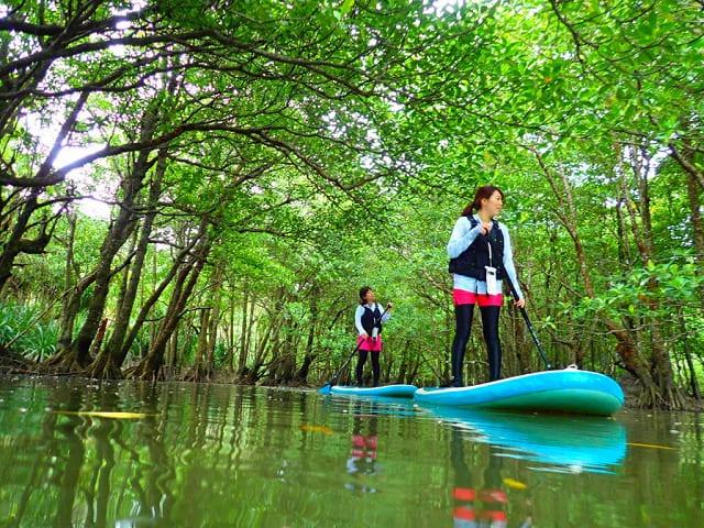 マングローブ林でカヌーを楽しむ女性たち