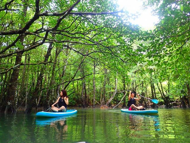 マングローブ林でカヌーをするカップル