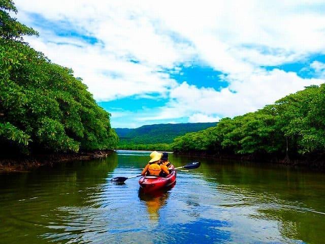 カヌーでマングローブ林を行く