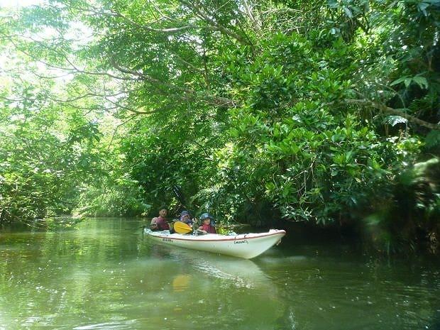 マングローブ川をカヌーですすむグループ