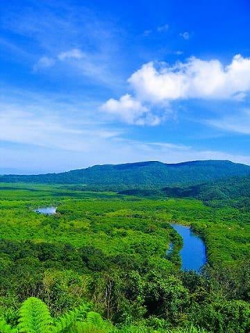 マングローブ林を山から臨む