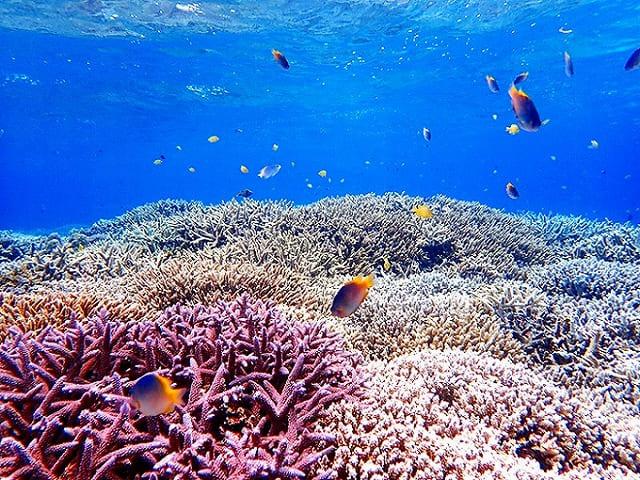 枝サンゴと海水魚
