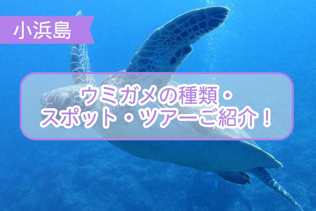 小浜島のウミガメについて