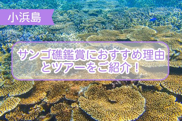 小浜島のサンゴ礁について