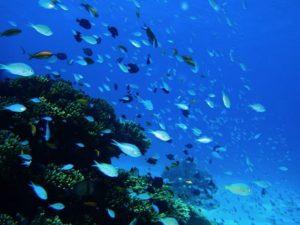 日本有数のシュノーケリングスポット慶良間諸島の海