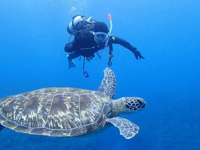 石垣島ダイビングでウミガメと一緒に泳ぐ