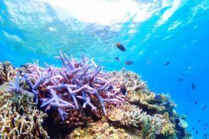 小浜島に生息するカラフルな珊瑚礁と熱帯魚