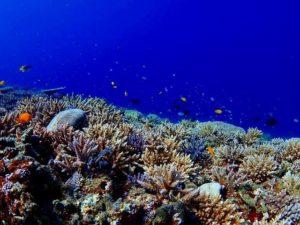 宮古島の海のサンゴ礁と熱帯魚