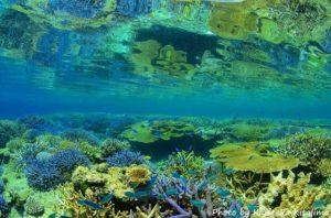 宮古島八重干瀬の珊瑚礁