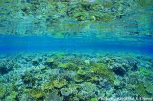 八重干瀬のカラフルな珊瑚礁