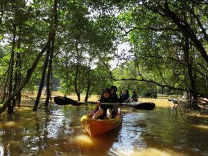 アーチ状のマングローブ川をカヌーで体験