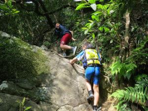 亜熱帯動植物豊かなジャングルトレッキング