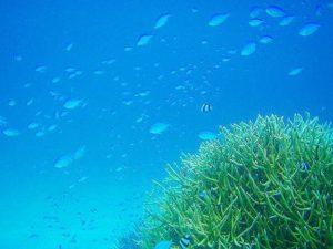 小浜島の透明度抜群の海